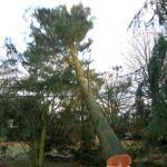 Baum faellt