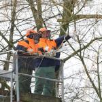 Arbeiten mit der Motorsaege im Hubsteiger (Wietzendorf)